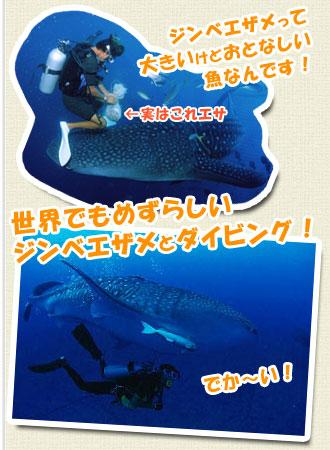 ジンベエザメ体験ダイビング
